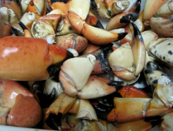 Stone Crab at Gay Fish Company in Beaufort - photo by Jordan Wright