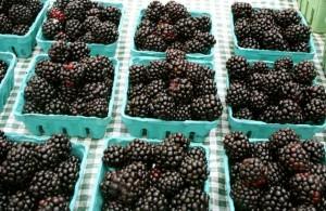 Blackberries - photo by Jordan Wright