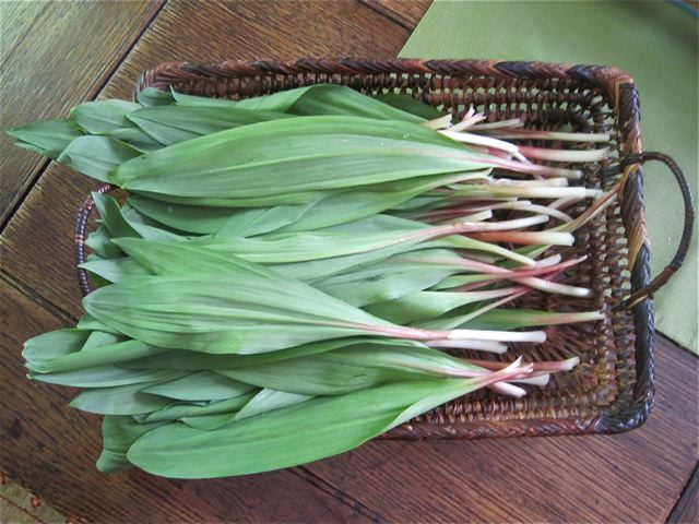 A mess of ramps ready for the pan - photo credit Jordan Wright