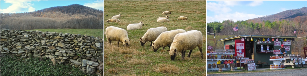 Rappahannock Pasture - Cluneford Sheep - Roadside Cider Shop - Photo credit Jordan Wright