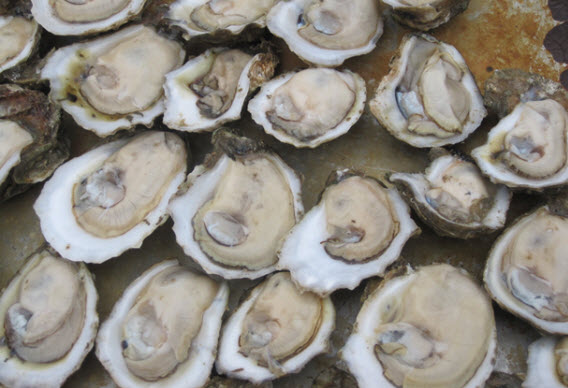 Appalachicola oysters ready for the grill - photo credit Jordan Wright