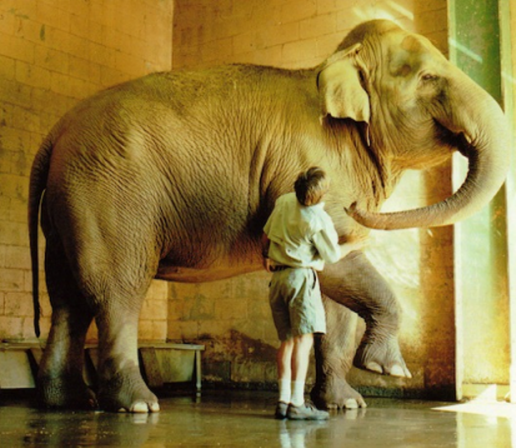 David works with elephant
