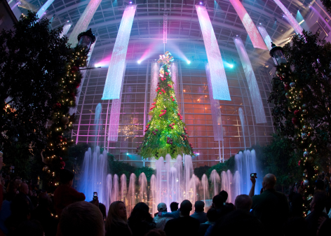 Christmas - Nighty Tree Lighting Show