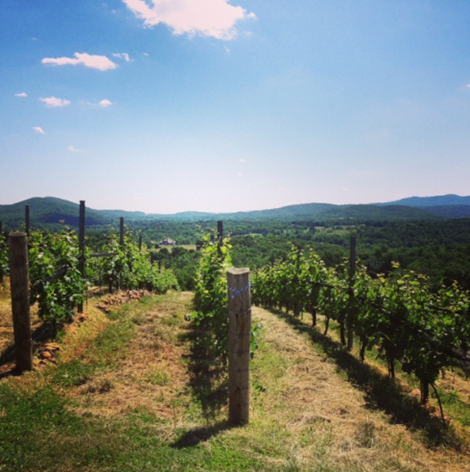 RdV vineyards overlooking the Blue Ridge Mountains