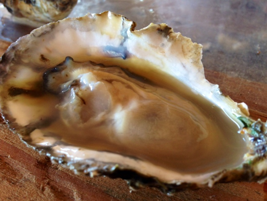 "Sold to top DC restaurants as the ""Ugly Oyster"""