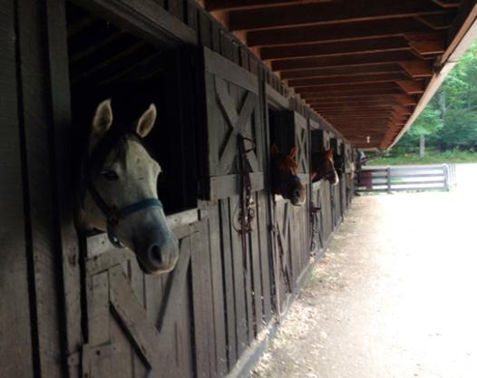 Skyland horse-stable