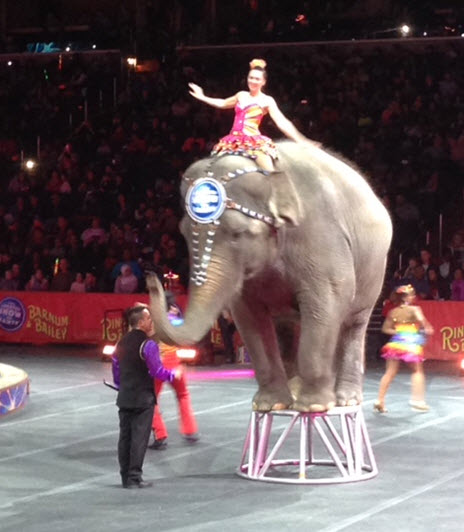 Elephant on stan