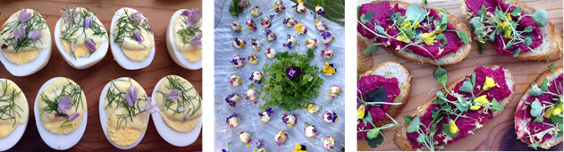 Deconstructed Deviled Eggs - Fleur de Chèvre covered in edible flowers - Beetroot Crostini with flowers and microgreens