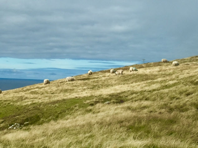 Sheep graze atop the headland on Arranmore Island